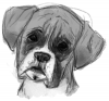 Dog Sketch 2.png