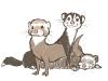 ferrets.png