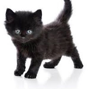 National black cat day on august 27th