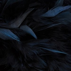 raven feathers banner.jpg